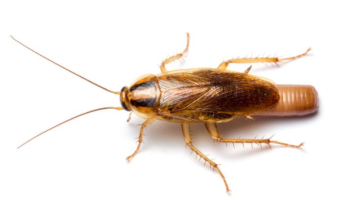 "A new study has found that the total release foggers (known as ""bug bombs"") used to kill cockroaches indoors are actually quite ineffective."