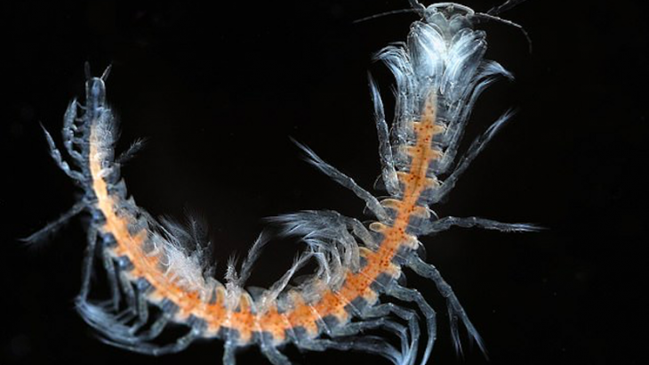 A research trip exploring caves in the Turks and Caicos Islands near the Bahamas has uncovered a potentially new species of remipede.