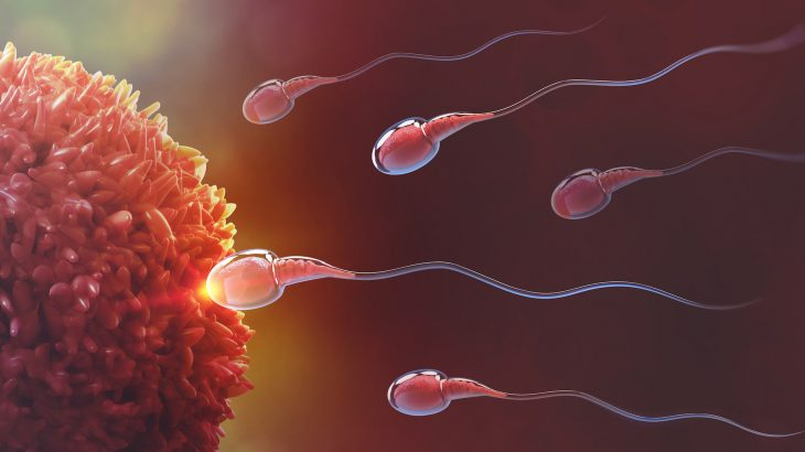 Researchers at the University of Birmingham UK have pinpointed exactly how sperm move their tails to swim.
