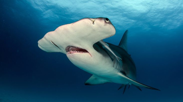 Scientists at the University of Exeter have discovered that endangered sharks are being sold as food in the UK.