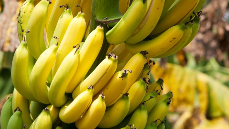 Gene editing could help eliminate a deadly banana virus called streak virus that can devastate entire plantations.