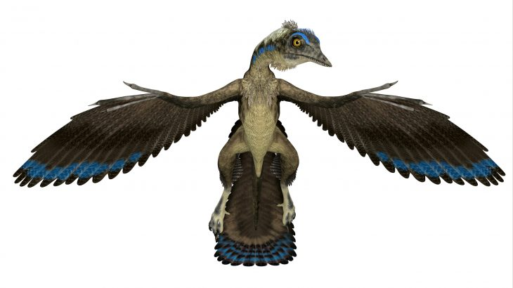 The first feather fossil ever to be discovered does not belong to the prehistoric bird Archaeopteryx as was originally thought.