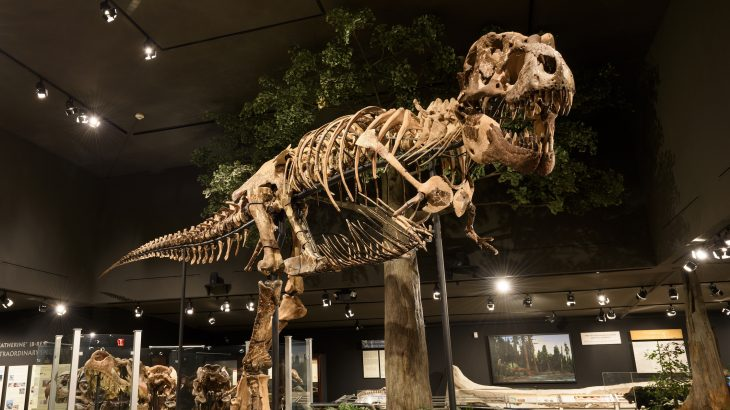 The Smok wawelski shared many similarities with T. Rex and the theropod likely crushed up and ate the bones of its prey to access the marrow.