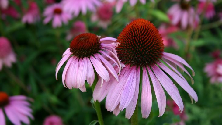 5 Easiest Perennial Flowers To Grow In