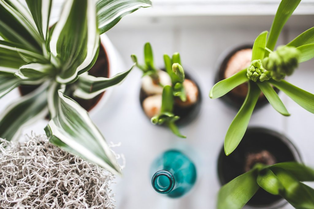 houseplant identification