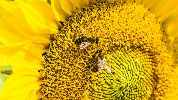 Researchers from RMIT University in Melbourne, Australia have discovered that bees are capable of doing basic mathematics.