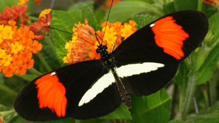 New research helps explain why butterflies are driven to choose mates that have a similar appearance and coloring.