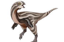 A dinosaur species that was recently discovered in the Gobi Desert somewhat resembled a huge chicken with no teeth.