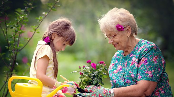 Researchers found that grandchildren's survival is greatly increased by a grandmother's involvement, but only if grandmothers are healthy.