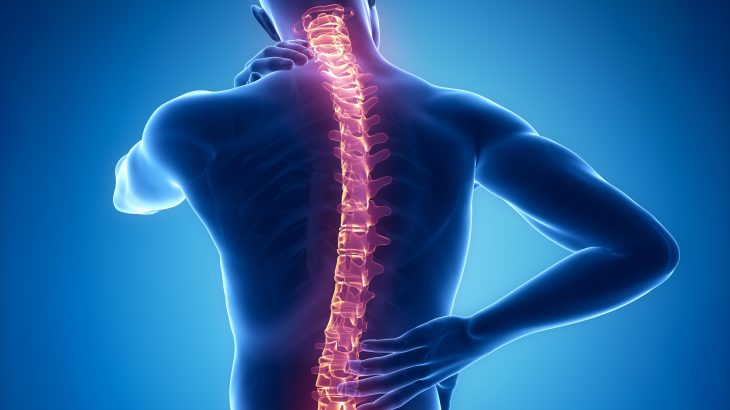 A new study found that the nerves that run down the spinal column can control complex motor functions in humans.