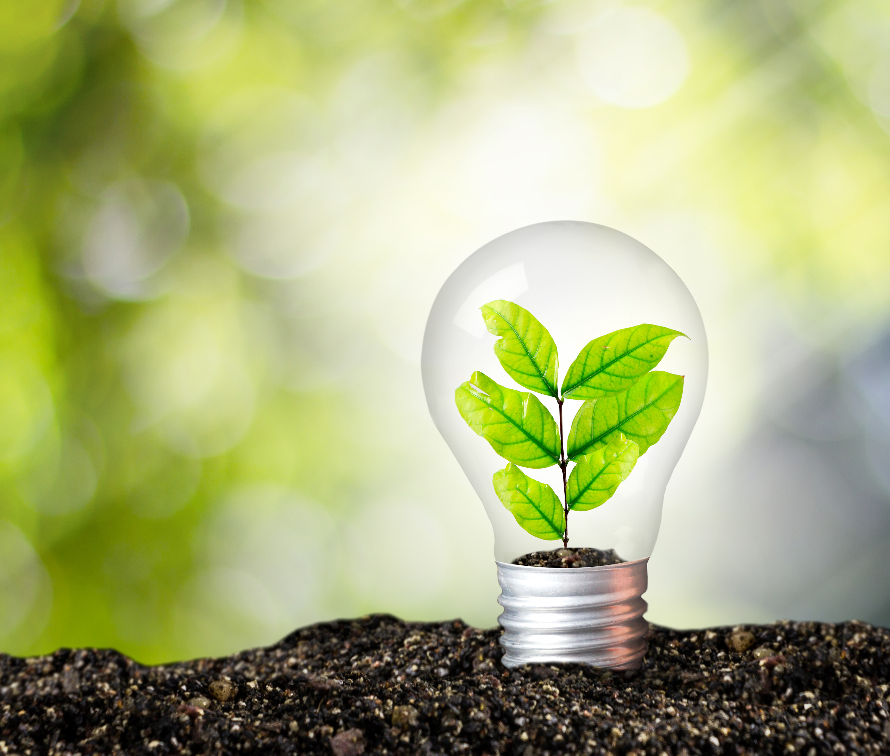 Plants can generate electricity… and we may be able to use ...