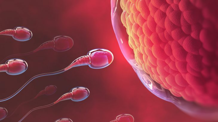 """A recent study led by the University of East Anglia has revealed that """"older"""" sperm produce healthier offspring."""