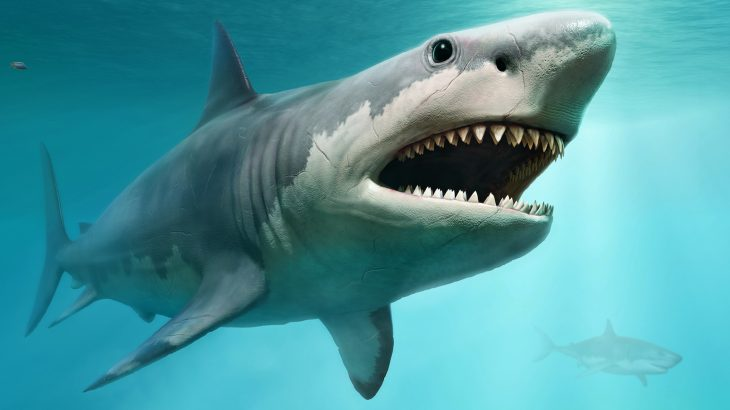 Megalodon was present in the fossil record until 3.6 million years ago, which means that it went extinct a million years earlier than thought