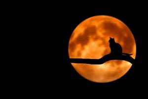 nocturnal cat