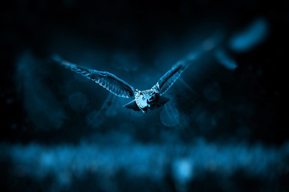 why are some animals nocturnal