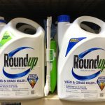Glyphosate exposure may increase the risk of non-Hodgkin lymphoma, an immune system cancer, by as much as 41 percent.