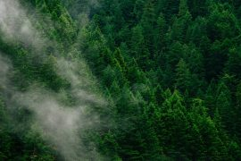 Scientists can identify forest areas in need of conservation management and investigate how soil carbon sinks impact atmospheric CO2 levels.