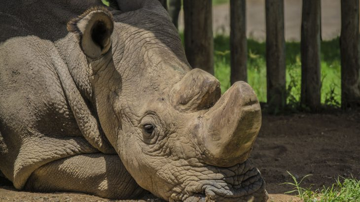 Researchers have managed to create an embryo using the sperm of a male northern white rhino that was collected before it died.