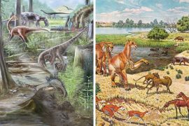 New research shows that the amount of biodiversity we have on land today has remained the same for at least 60 million years.