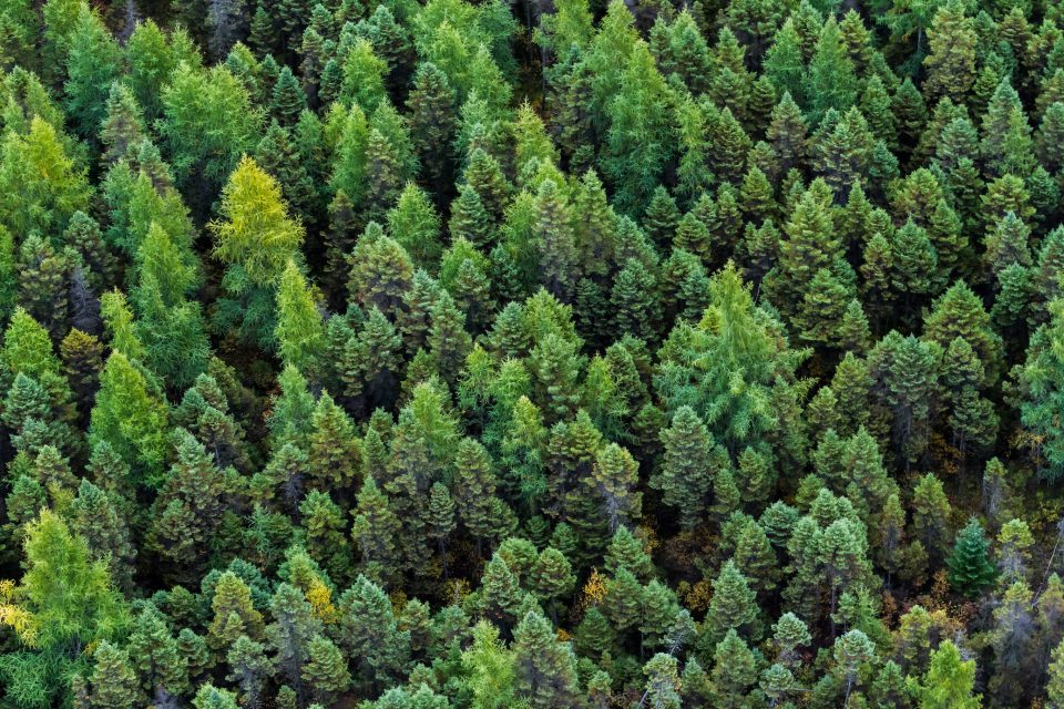 More than half of the carbon stored in the world's forests is located in regions where the trees are relatively young.