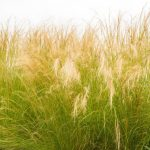 Wild grasses steal genes from their neighbors by essentially genetically modifying themselves to enhance their own survival.