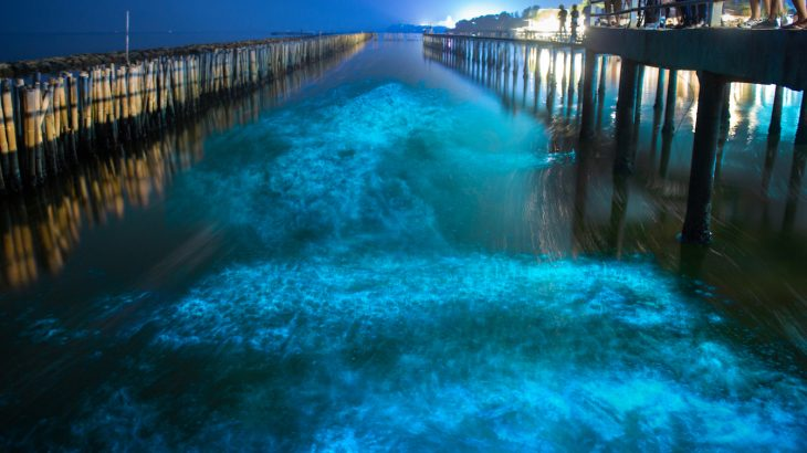 Bioluminescence is often used as a form of communication and is very common in the ocean, even if it's not always so noticeable.