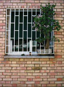 jade plant in window