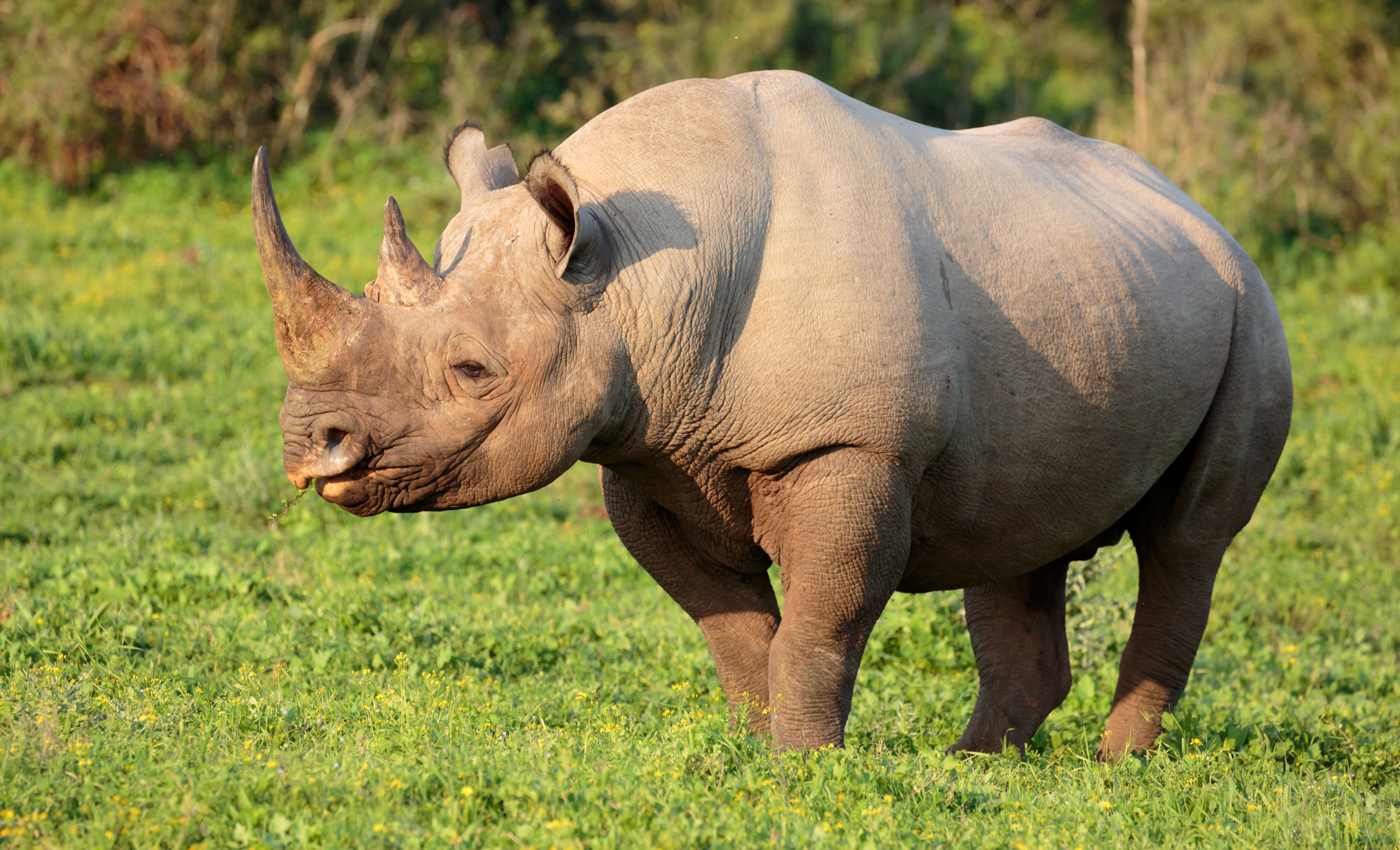 10 most endangered animals on Earth • Earth com