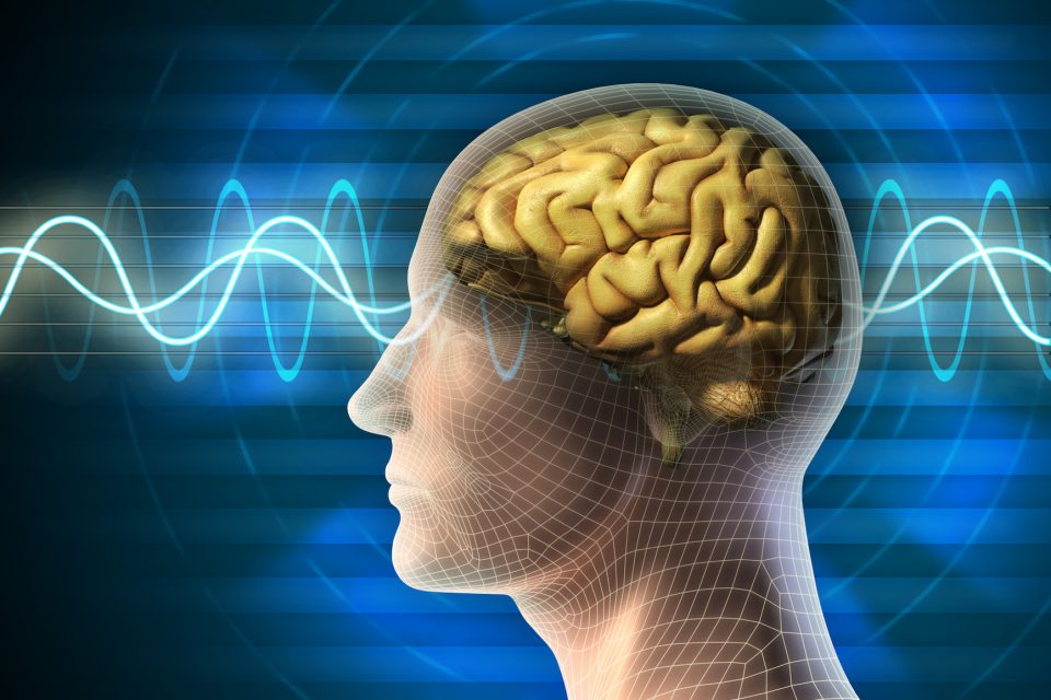 Incredibly, the signals can even jump from neurons in one brain region to another when the tissue has been completely severed.