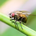 A new study has found that while sleep plays a vital role in wellbeing and cognition in humans, for male fruit flies, it is not essential to survival.