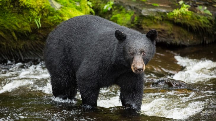 A new study published in Nature found that bears who eat human food hibernate for shorter periods, thus accelerating their cellular aging.
