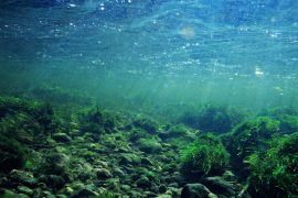 A new study has revealed that underwater algae may have been responsible for passing along the built-in ability of plants to detect and respond to drought.