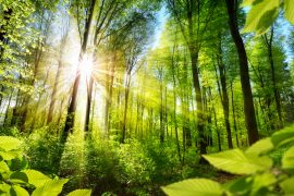 After conducting a study of the world's forests, one scientist argues that planting a little over one trillion new trees could cancel out ten years of emissions.