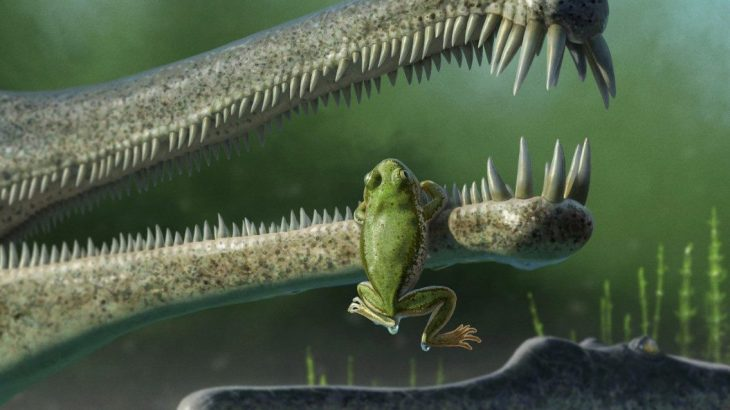 Paleontologists at Virginia Tech have identified the fossil remains of what may be the oldest frogs in North America.