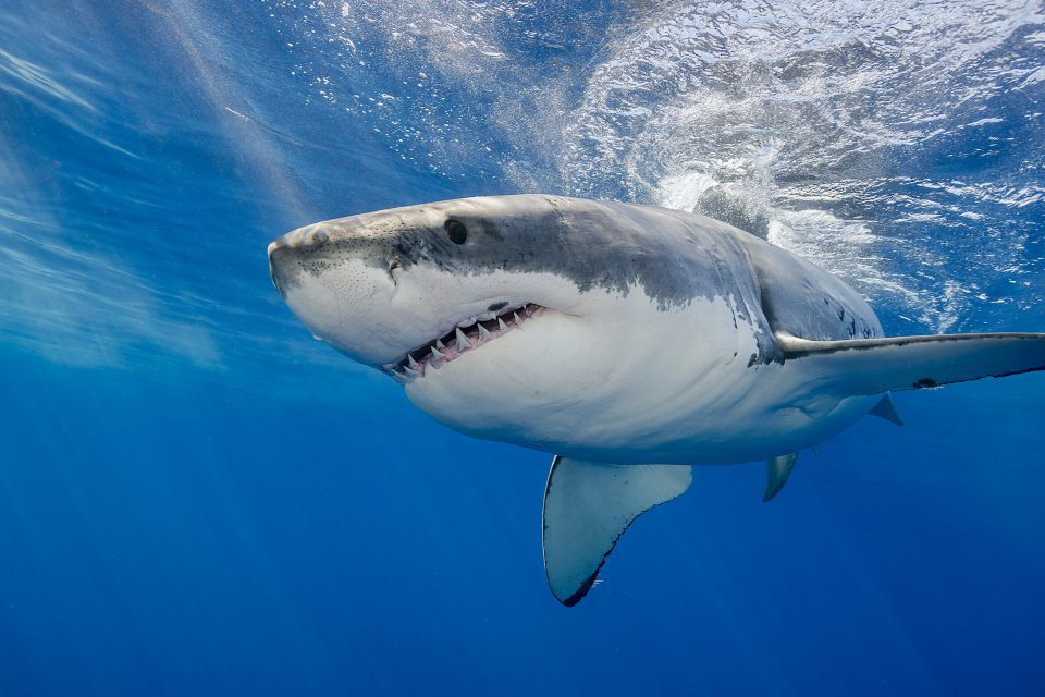 Researchers at Louisiana State University found that even though the number of shark attacks has increased over time, the risk of shark attacks remains low.