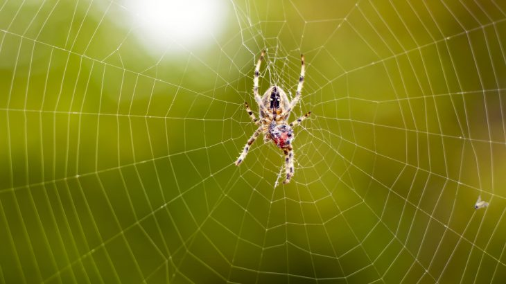 A research team from MIT have found that spider silk contains a property that could be useful in the development of artificial, robotic muscle.
