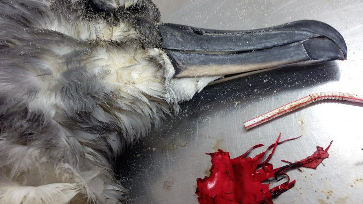 A new study from the University of Tasmania has revealed that balloons pose the biggest threat to seabirds of any type of plastic debris.