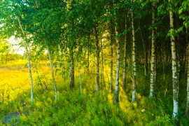 Tree planting programs in India and China are helping to add new greenery to the Earth on a major scale.