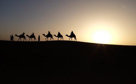 desert animals hardore