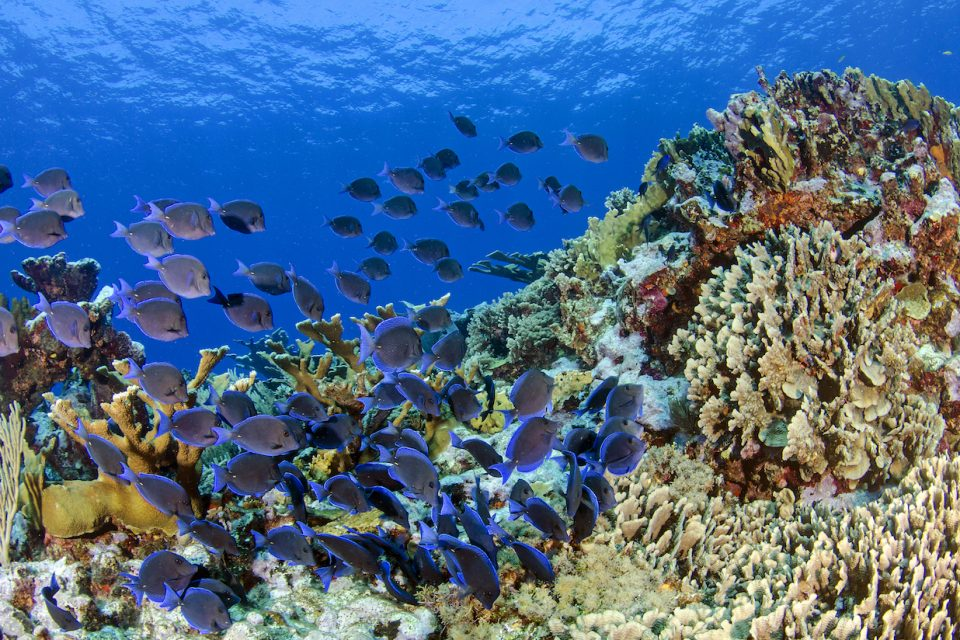 A new study has found that diversity plays an equally important role as population numbers and biomass in keeping corals healthy and reef systems thriving.