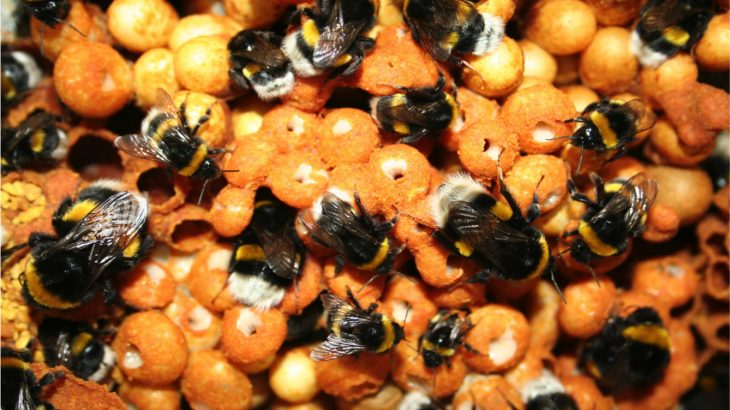 An unprecedented study led by Queen Mary University of London has revealed that the chemicals in pesticides affect bees on a molecular level.