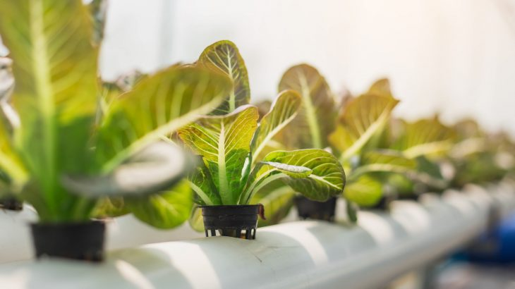 A closer look at the history of hydroponic agriculture and its role in the current debate over the USDA organic label.
