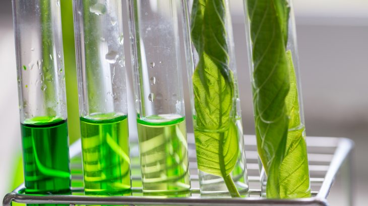 A genetically engineered microbe could be used to break down woody plant material and create a biodegradable alternative for plastic.