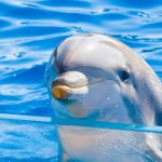 A team of researchers led by the Brookfield Zoo in Illinois are working to assess the health and wellbeing of dolphins and other marine mammals in captivity.