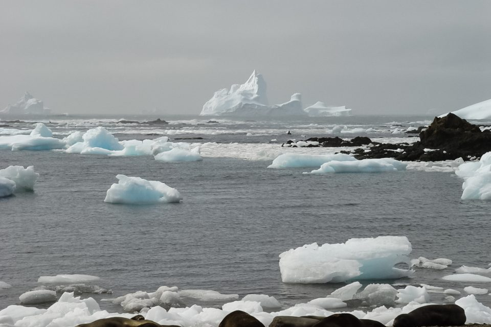 Suitable conditions for marine microorganisms will become extremely limited in the Southern Ocean by the end of the century.