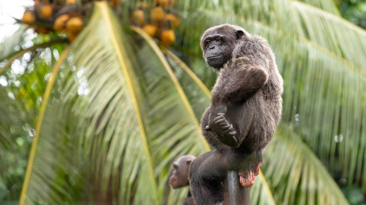 The chimpanzee isn't the only endangered animal suffering from habitat loss and climate change-driven habitat degradation.