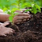 Planting 1.7 billion acres of trees across the globe would remove about three billion tons of atmospheric carbon a year.