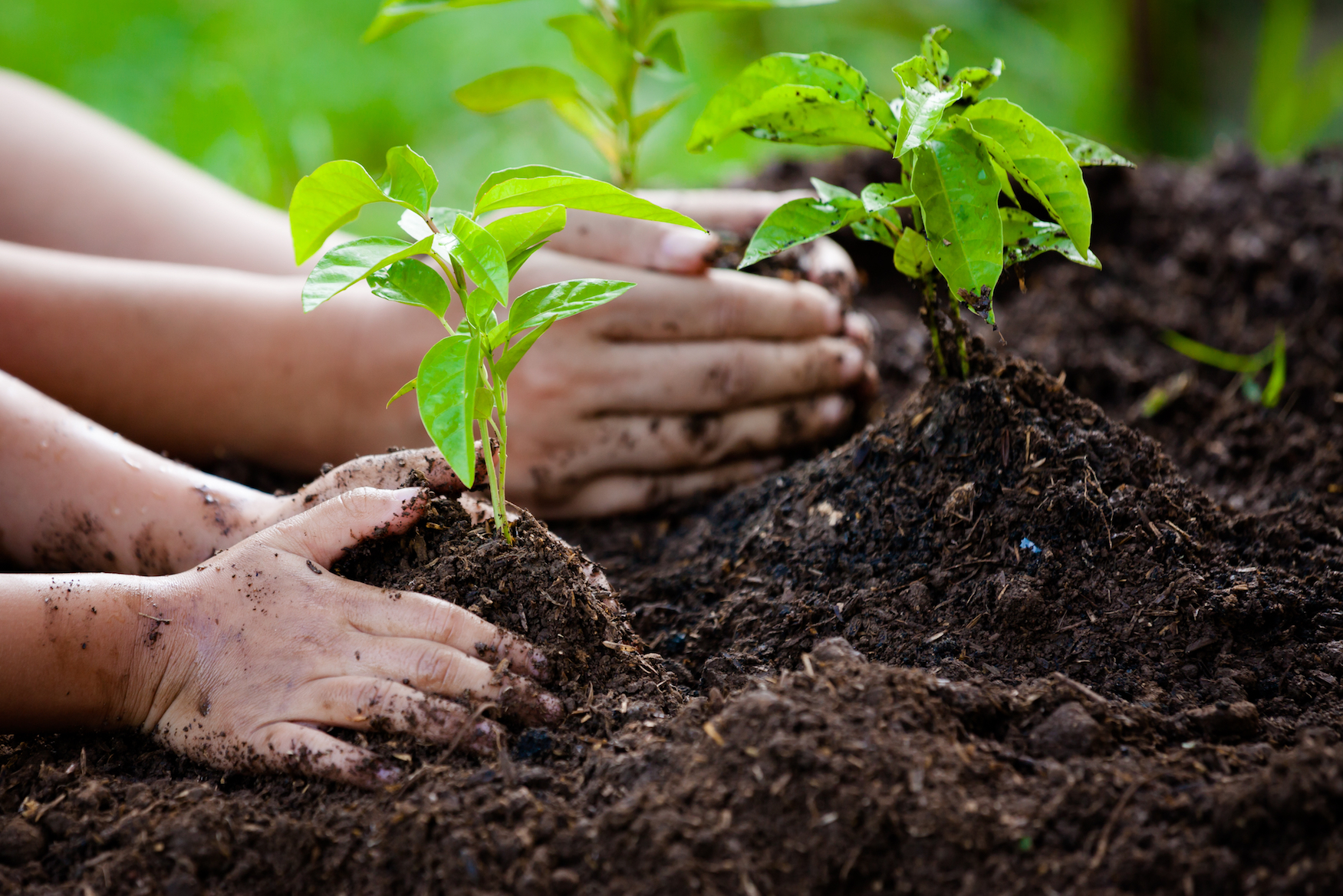 Planting trees as a PRODUCTIVE thing to do.