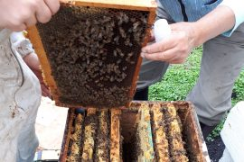 Researchers at the University of British Columbia (UBC) have discovered that honey samples can be used to measure environmental pollution.