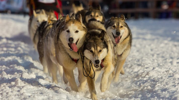 Women in the Iditarod and the treatment of racing dogs